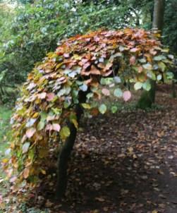 Forestry Commission fun at Westonbirt Arboretum