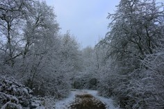Salcey Forest in the snow