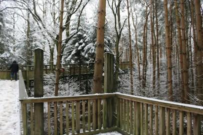 Salcey Forest Tree Top Walk