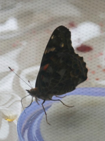 Butterfly World from My Living World