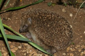 Woodland Trust Wildlife Swatch Books