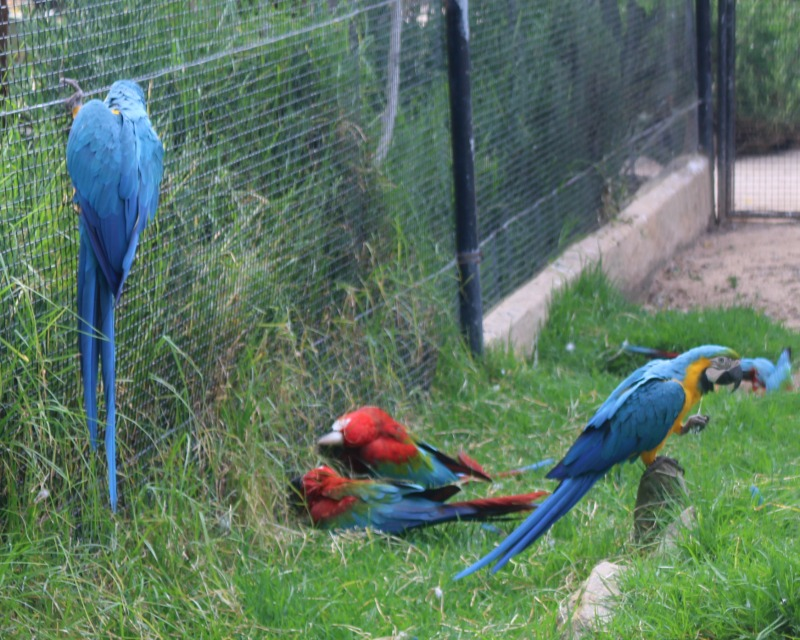 Enjoying a day out at Zoo de Lagos in the Algarve 9