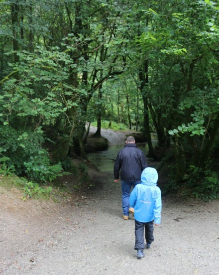 A walk through Cardinham Woods in the rain
