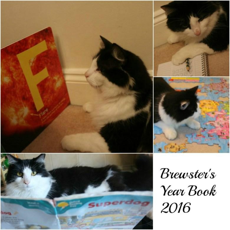 Brewster goes to school with WHISKAS® Kitten Kollege