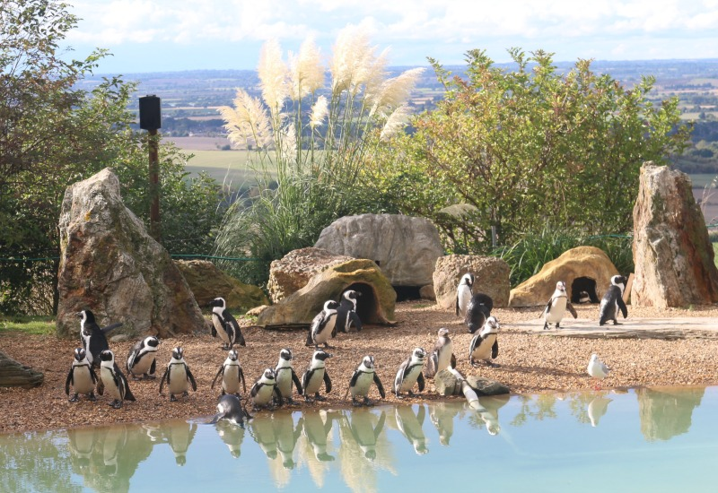 Enjoying a visit to Whipsnade Zoo in October