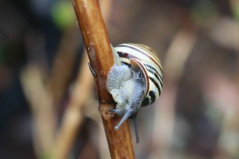 Snails pace - My Sunday Photo 120317