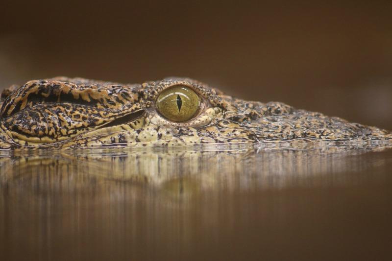 A beady eye - My Sunday Photo 110617