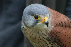 Enjoying Wheatley Birds of Prey