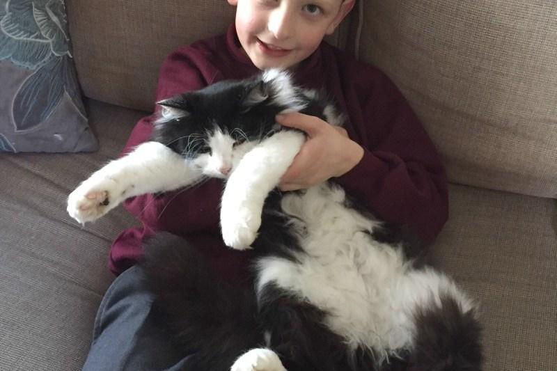 The Cat Hugger - Living Arrows