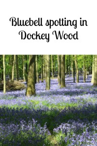 Bluebell spotting in Dockey Wood