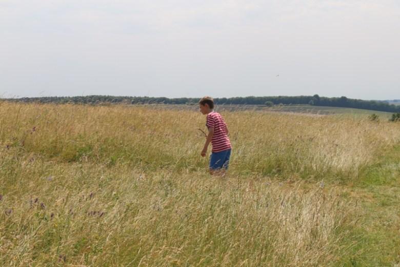 Exploring Cotswold Lavender
