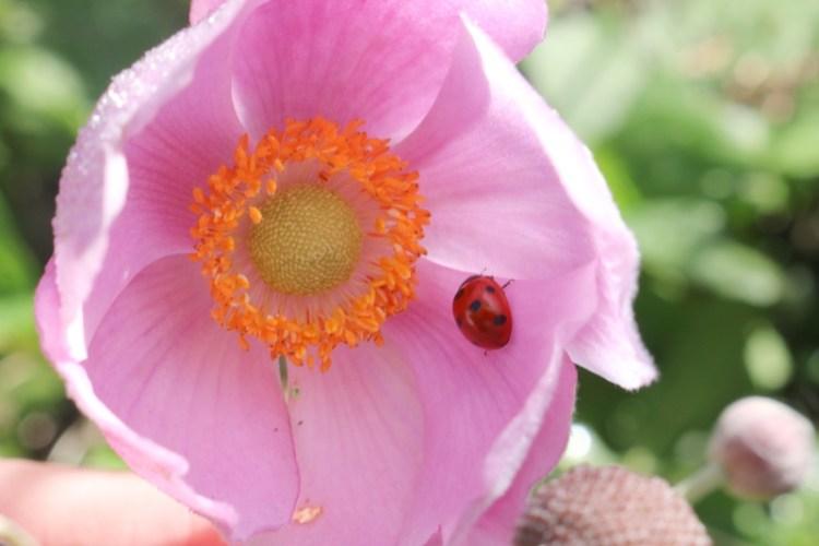 What the Ladybird Heard - My Sunday Photo 071018