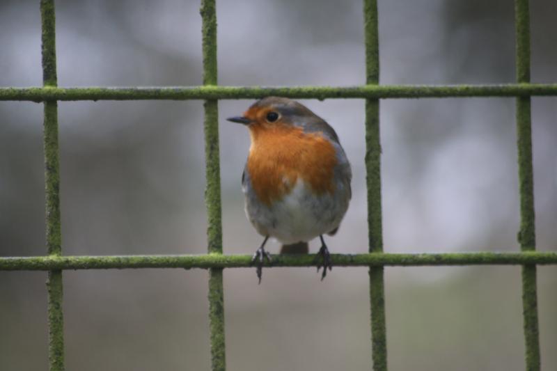 Bird on the Wire - My Sunday Snapshot 130119