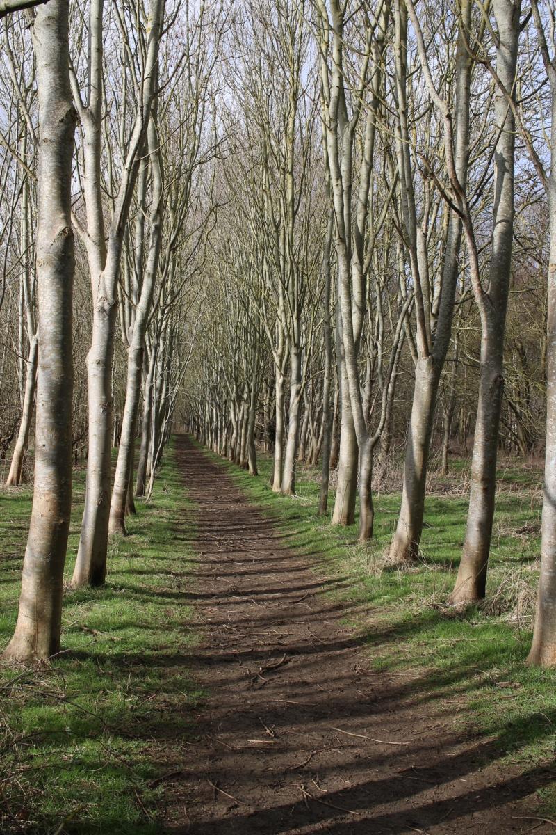 The Well Trodden Path - My Sunday Snapshot 240219