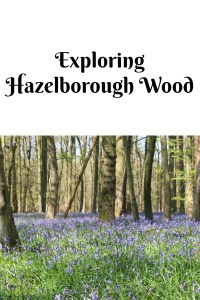 Exploring Hazelborough Wood