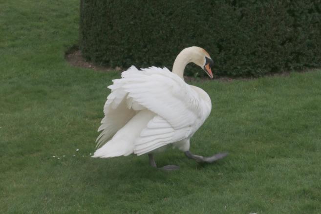 Ruffled Feathers - My Sunday Snapshot 070419