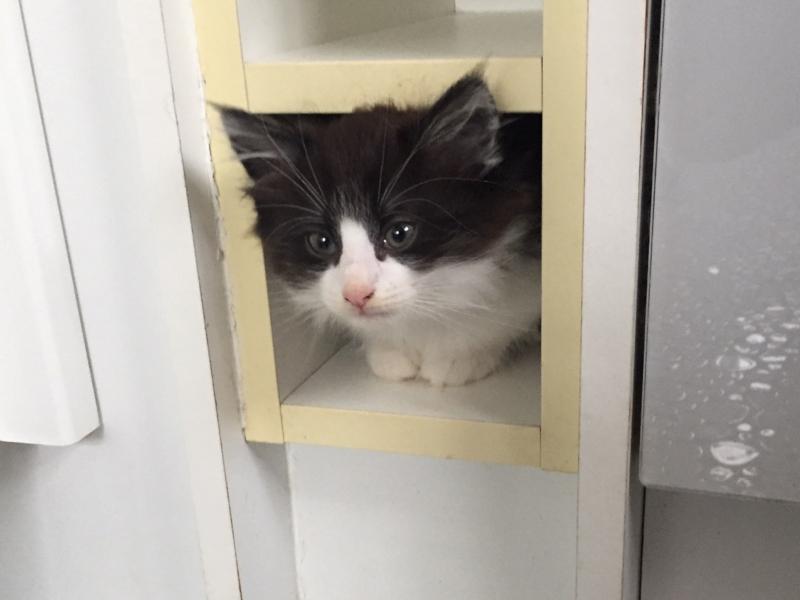 Let me introduce you to Paddington - our new kitten