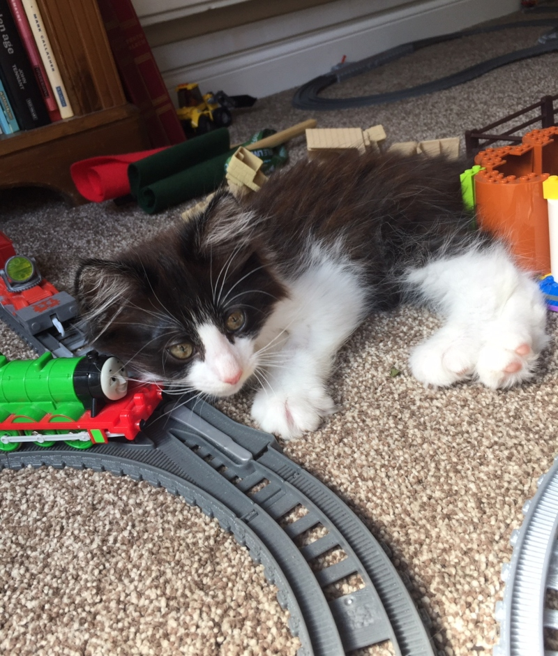 kitten and Percy Trackmaster train