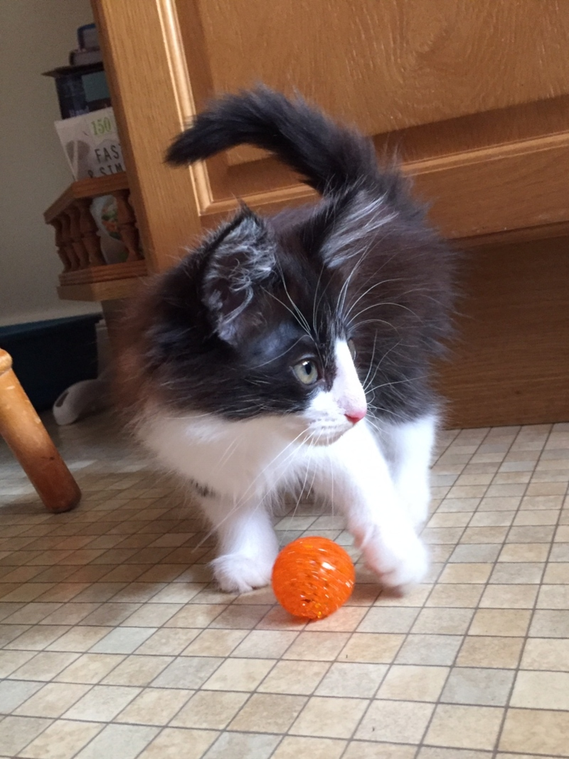Kitten with ball