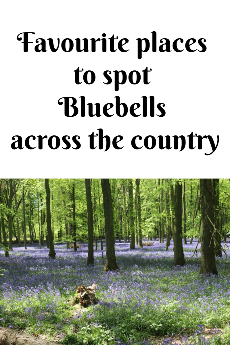 Favourite places to spot Bluebells across the country