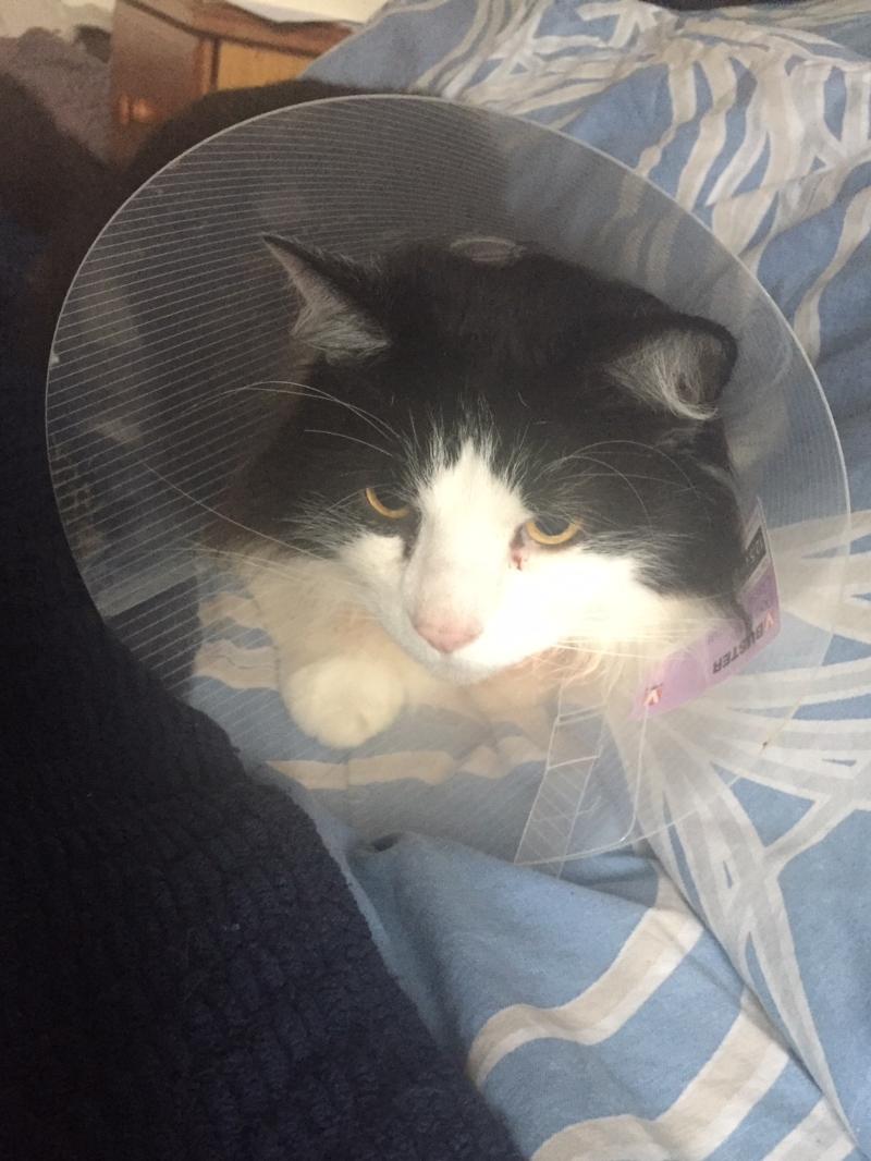Cat with cat cone