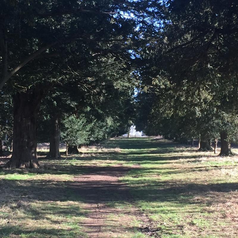 Exploring footpaths close to home - Tusmore Estate