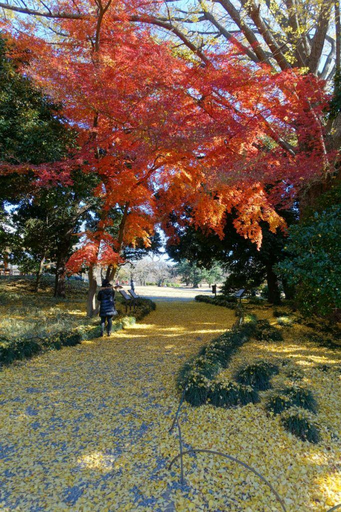 新宿御苑秋 旧御涼亭の対岸付近 もみじとイチョウの落ち葉