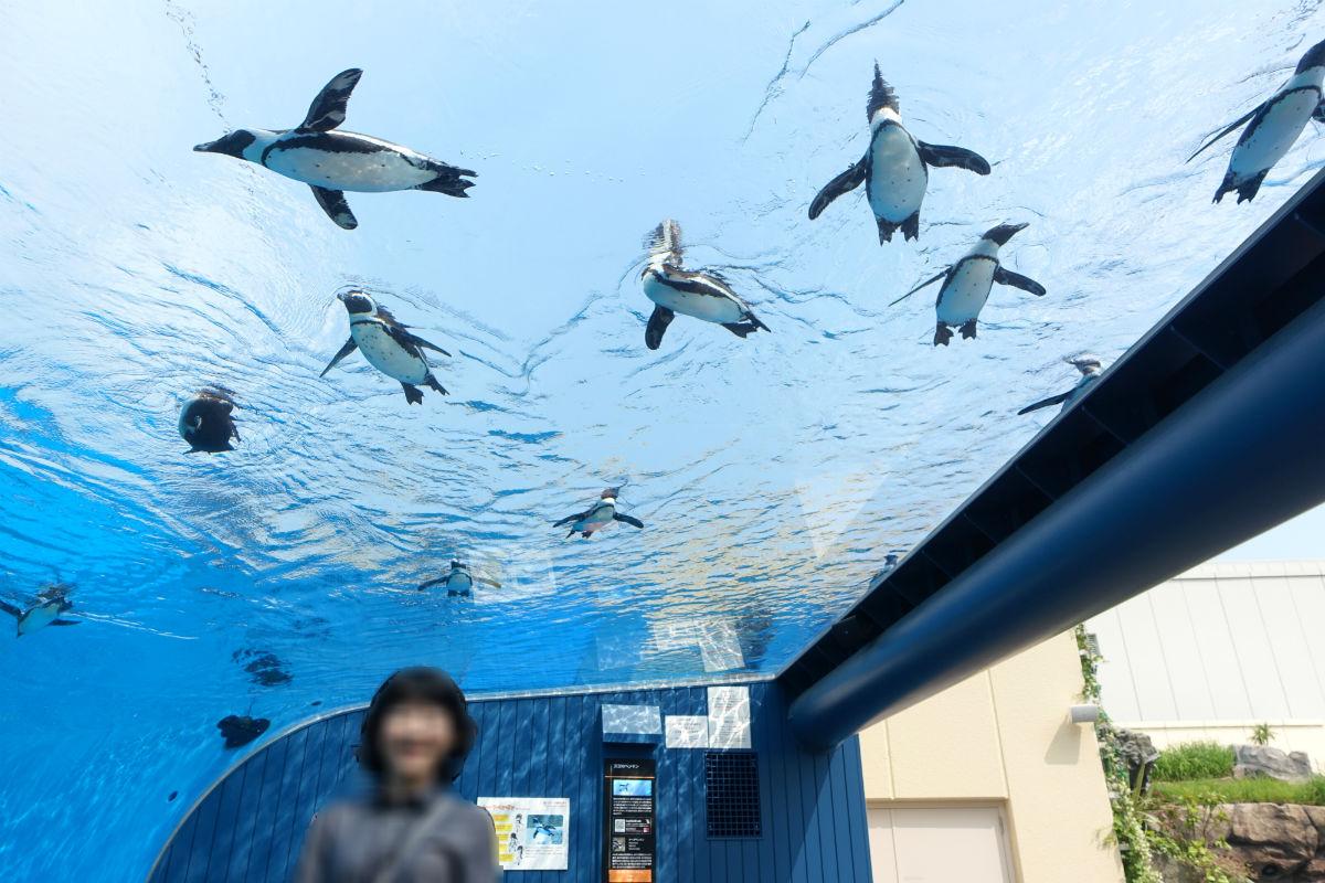 Sunshine aquarium 空飛ぶペンギン3