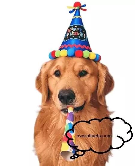 Happy Birthday Golden Retriever Puppies Top Ideas To Make You Happy