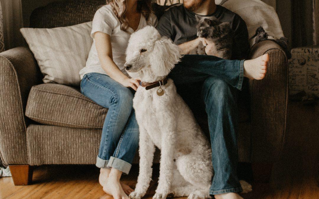 Família com cachorros