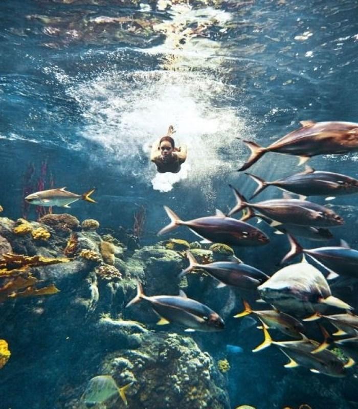 5-rihanna-rechini-shark-harpers-bazaar-blogvedete