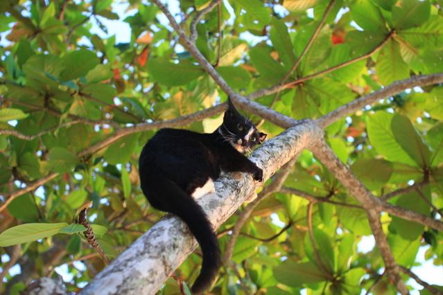 kat in de boom