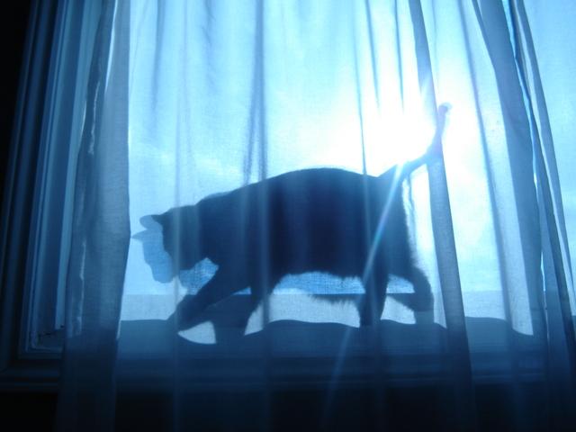 kat gordijn