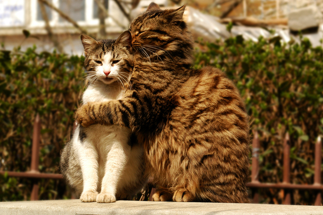 katten liefde