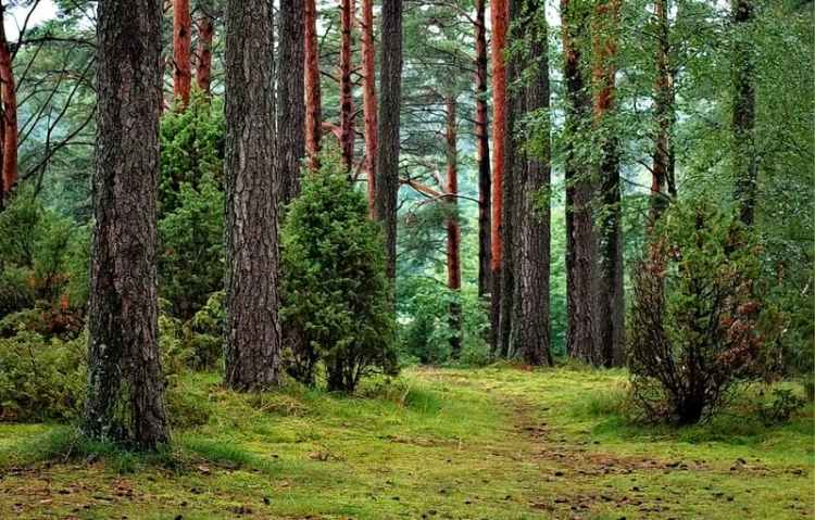 Picture of Gougane Barra Forest