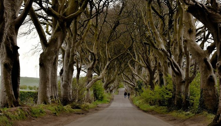Picture of The Dark Hedges