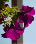 blomst.jpg