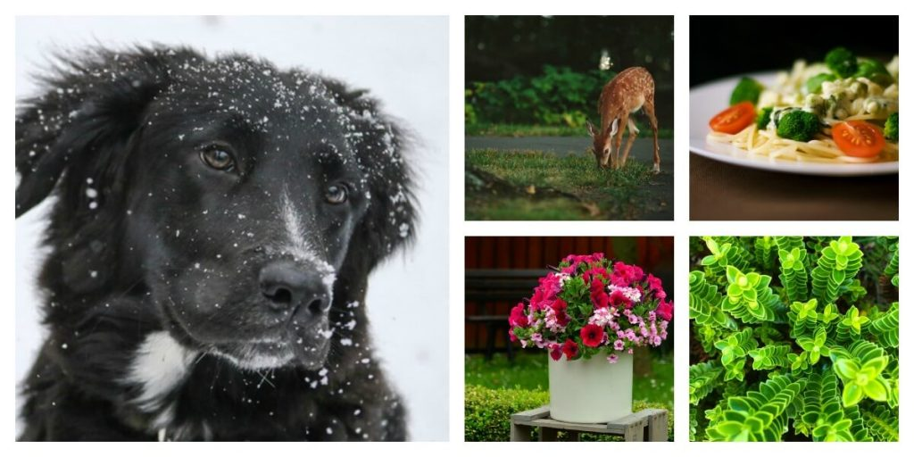 Just a sample of the free stock photos available.
