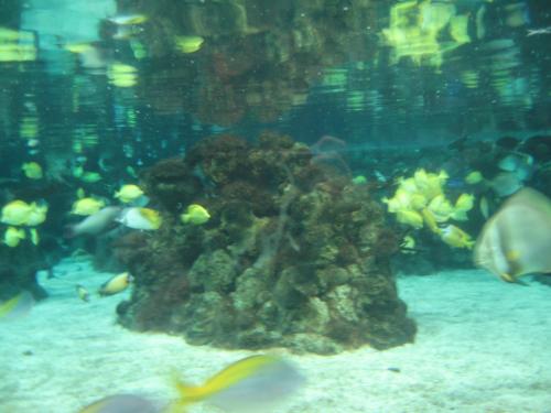 fishrock