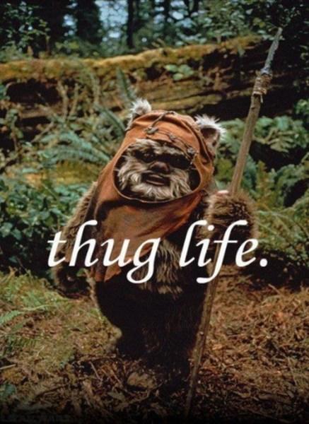 Wicket thug life