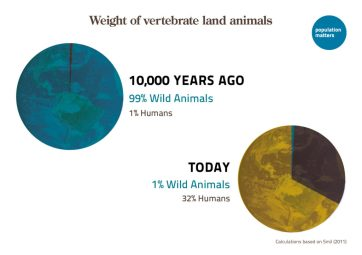 Weight of vertebrate land animals