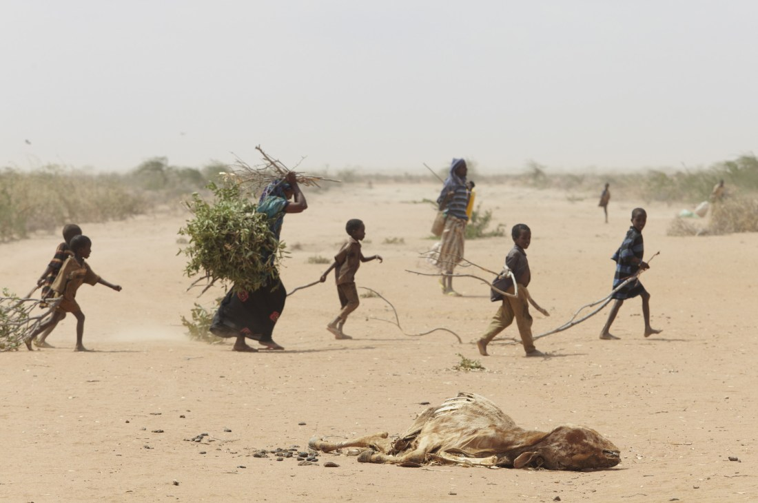 Oxfam_East_Africa_-_A_family_gathers_sticks_and_branches_for_firewood