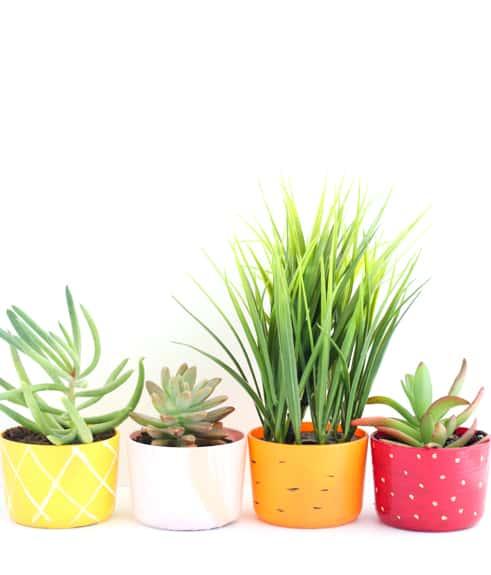 DIY Fruit and Veggie Succulent Planters
