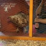 Hometown Tourism: Chicken Sh*t Bingo at Ginny's Little Longhorn Saloon