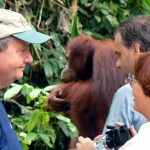 Wanderlust Wednesday – Orangutans in Borneo