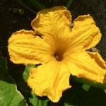 Garden0005-