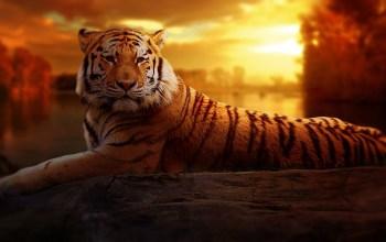 Siluman Harimau, Antara Legenda Dan Kenyataan