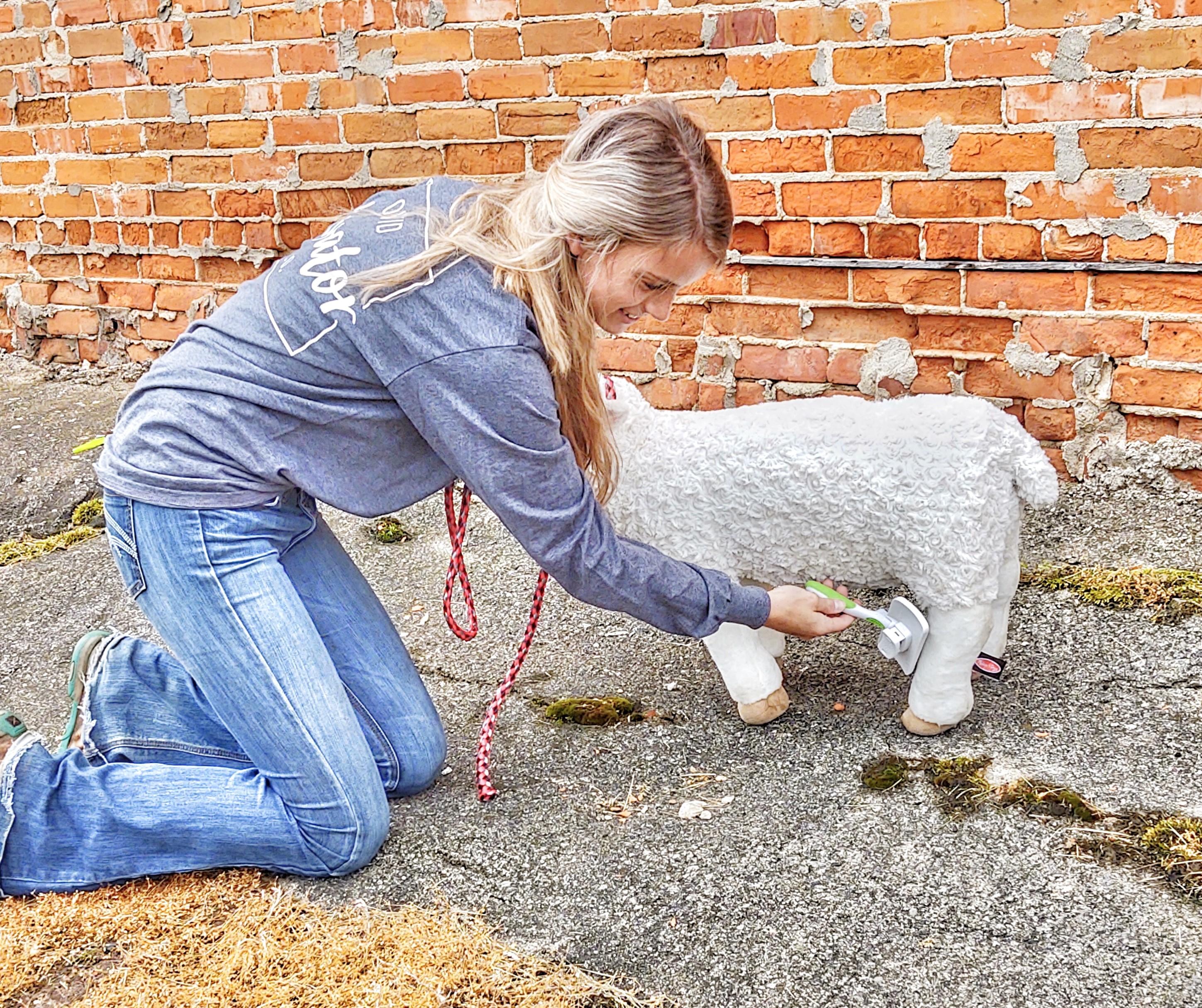 kaddi lamb