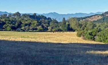 Ventura River Steelhead Preserve