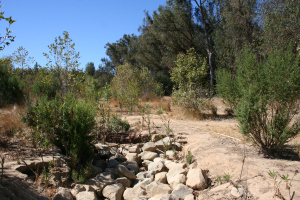 Taormina Drainage Eucalyptus to your right Today